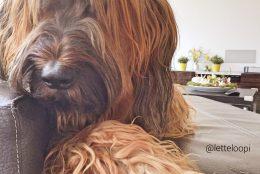 Die Pfötchenbox – die Abobox für den Familienhund